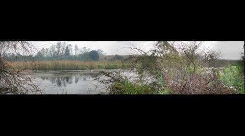 Humedal Angachilla Valdivia 3