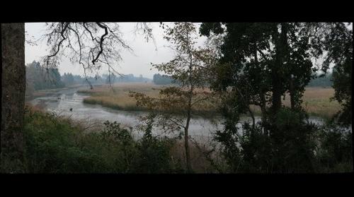 Humedal Angachilla Valdivia 4,