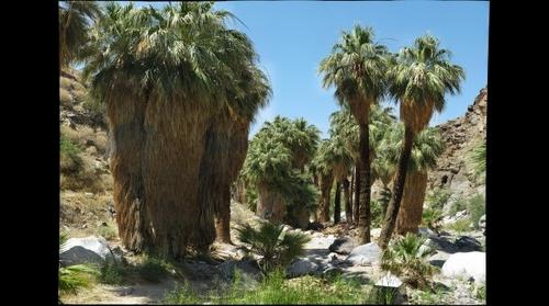 Palm Canyon - Plot #1