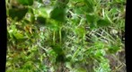 Green stuff...close up