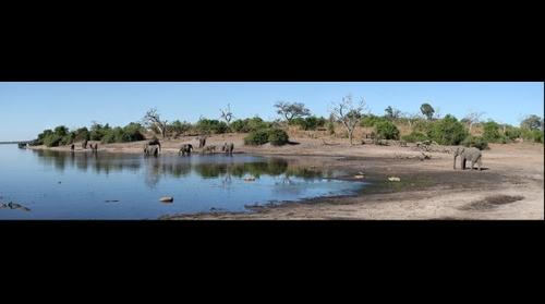 Elephant beach, Chobe National Park, Botswana