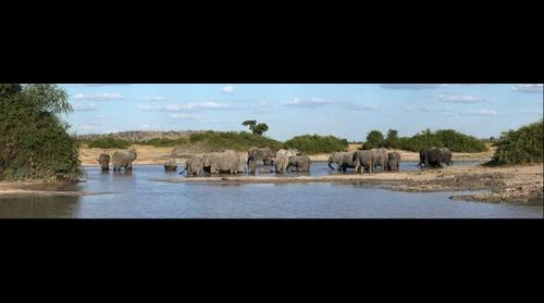 Elephant breeding herd at pan in Savuti, Botswana
