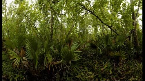 Palmetto Trail, Jean Lafitte National historical Park and Preserve, Barataria Preserve