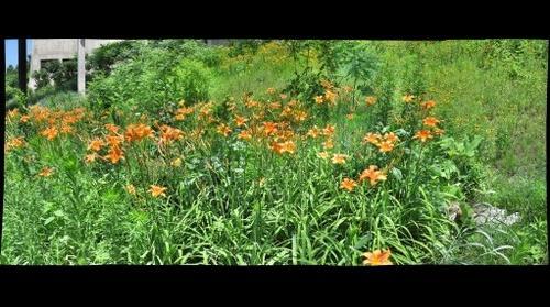 CMU Flowers