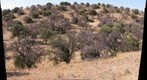 Oak/Juniper Savanna in southeastern Arizona