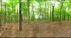 Dairy Bush GigaPan - 96 - June 29 2011