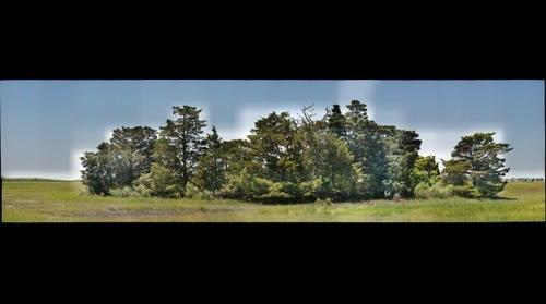 Tuckerton Shell Mound