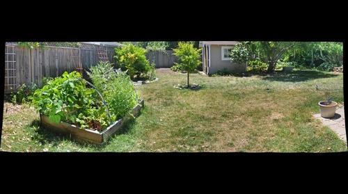 Our Garden 07022011