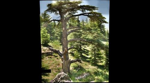 Becharre, Lebanon Cedars