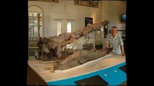 Weymouth Bay pliosaur