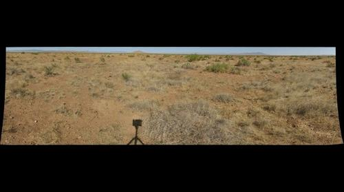 Interactive effects of prairie dogs and cattle on the mesquite establishment - Site 3