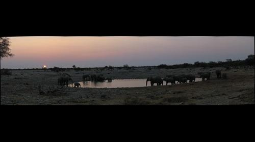 Elephant Sunset #1