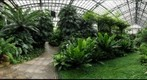 Fern Room, Garfield Park Conservatory