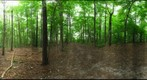 Dairy Bush GigaPan - 104 - August 24 2011
