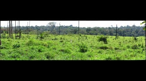 Pasture Field