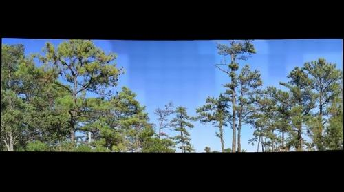 Trees Point Lookout