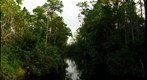 The Canal to Brick Lake, Osceola County, Florida