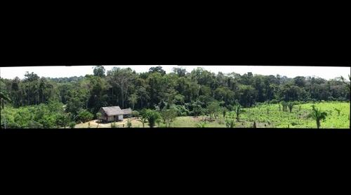 Amazon Farm in the Province of Tahuamanu, Southeastern Peru