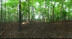 Dairy Bush GigaPan - 109 - September 28 2011