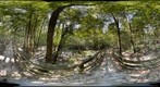Boardwalk at Congaree National Park