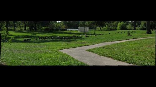 Hyde Park - Fountain of time birds 8-26-08