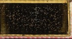 Chalkbrood 45min July 2011 Day02 (gigapan stitch using command line)
