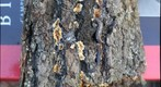 Lichen, Fungus and Slugs on Bark