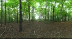 Dairy Bush GigaPan - 110 - October 05 2011