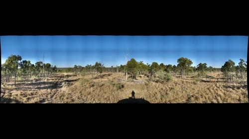 Australia - Eucalypt Woodland 1