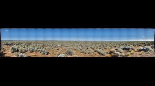 Australia - Bluebush 1