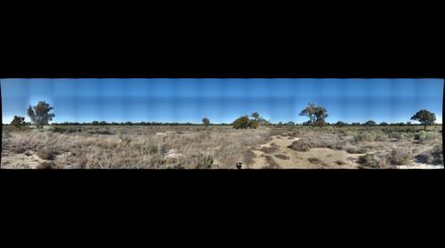 Australia - Saltbush 1