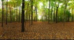 Dairy Bush GigaPan - 111 - October 12 2011