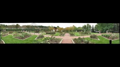 BBG- Rose Garden