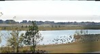 Canada geese, Walker Lakes, Edmonton