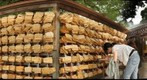 Meiji Shrine's prayers