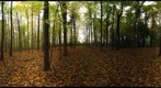 Dairy Bush GigaPan - 112 - October 19 2011
