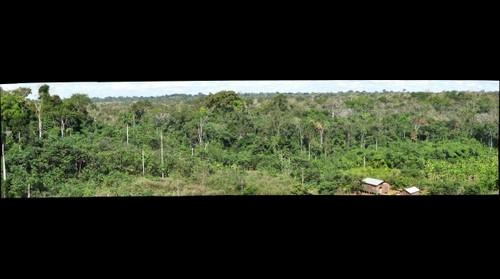 Primary Forest and Farmland in Southeastern Peru