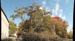 Fall foliage on the campus of Northern Virginia Community College