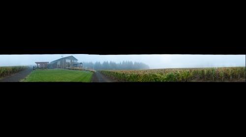 Ardiri Winery in the fog