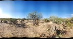 Saguaro National Park 4
