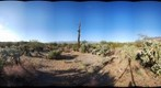 Saguaro National Park 5