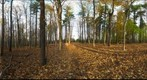 Dairy Bush GigaPan - 114 - November 02  2011