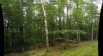 New England Back Yard - Dead birch tree