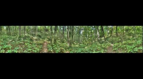 Appalachian Trail #3