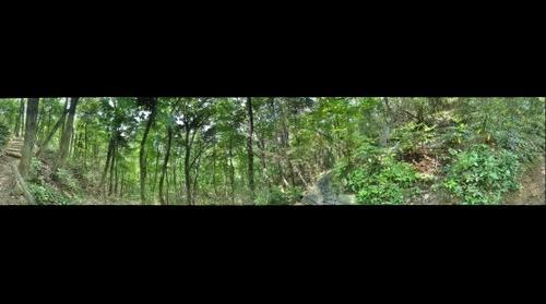 Appalachian Trail #5