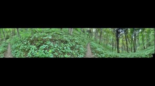 Appalachian Trail #6