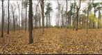 Dairy Bush GigaPan - 115 - November 02 2011