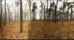 Dairy Bush GigaPan - 116 - November 16  2011