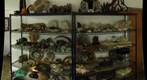 fossil colection, Willits