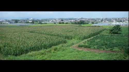 Nagamine, Kumamoto, Japan Corn Field